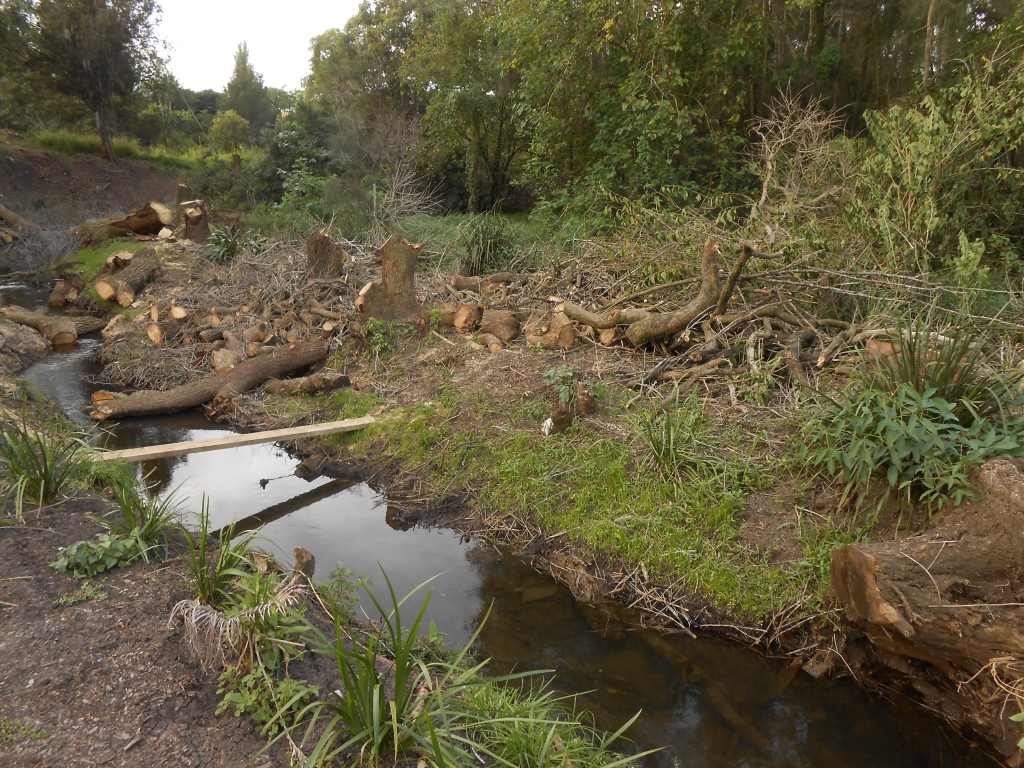 15/4/15-Further along the creek ore more trees being removed.