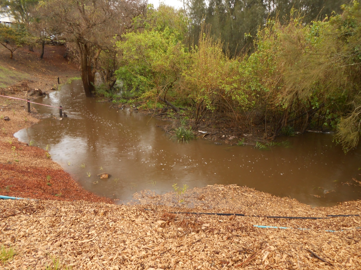 23/8/14-Creek swollen by overnight rains