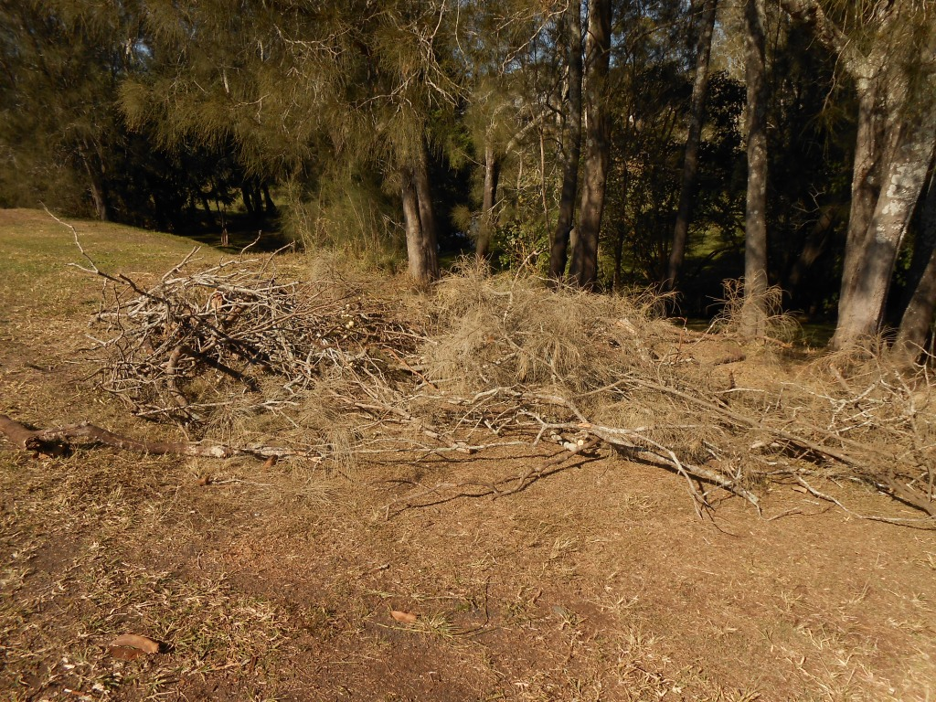 This tree was dragged from the lower bank with a 4WD and cut up for disposal.